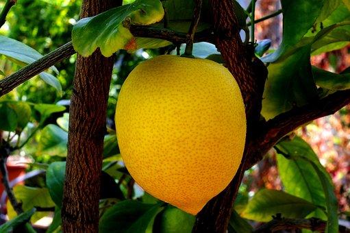 Lemon, Citrus Fruit, Limone, Italy, Yellow, Sour, Fruit
