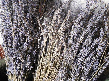 Lavender, Dried, Flower, Purple, Herb, Plant, Medicine