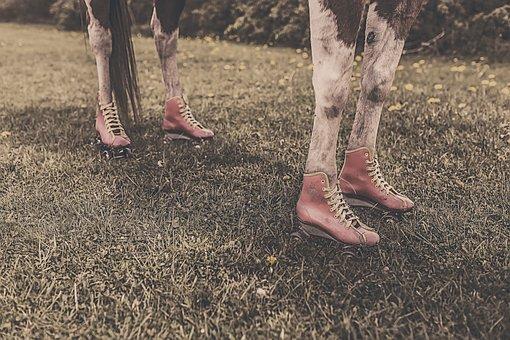 Horseshoes, Horse, Shoes, Legs, Feet, Farm Animal, Fun