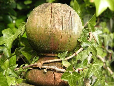Fence Post, Overgrown, Ivy, Wooden, Post, Growth, Plant