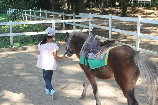 Horse, Pony, Young, Equestrian, Happy, Riding