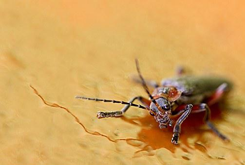 Close, Insect, Macro, Nature, Animal World, Probe
