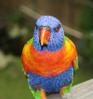 Bird, Nature, Colorful, Rainbow, Wild, Natural, Life