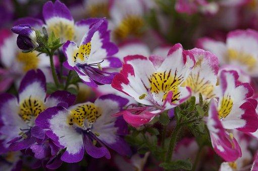 Bauernorchidee, Flowers, Bloom, Spring, Blossom, Bloom