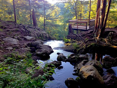 Buttermilk Falls, New Jersey, Forest, Moss, Nature