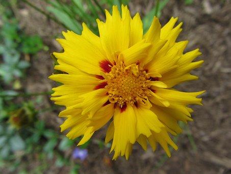 Western Nc, Flower, Yellow, Closeup