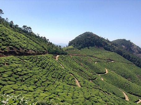 Tea, Plantation, Nature, Green, Field, Rural, Landscape