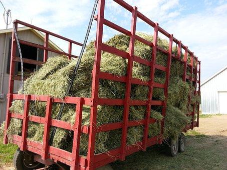 Hay, Food, Foods, Animal, Feed, Horse, Summer