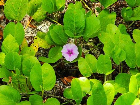 Leaves, Green, Purple Flower, Nature, Summer, Plant
