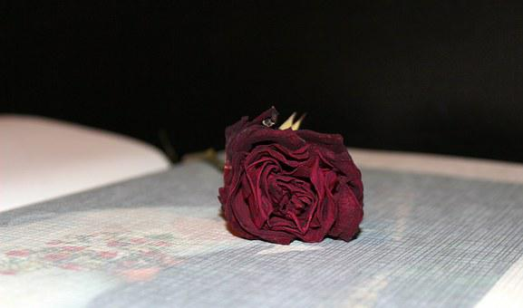 Photo Album, Dried Rose, Wedding Album, Memories, Love