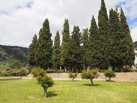 Orange Tree, Orange Grove, Plantation, Orange Breeds