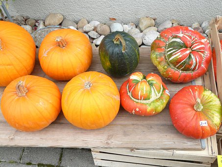 Pumpkins, Decorative Squashes, Cucurbita Pepo