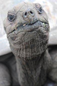 Turtle, Seychelles, Slowly, Tortoise, Giant Tortoise