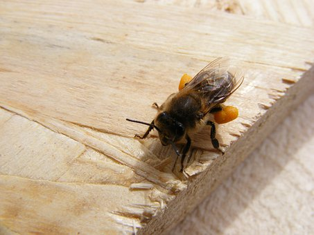 Bee, Dietary, Loaded, Poland, Supplement, Food, Drink