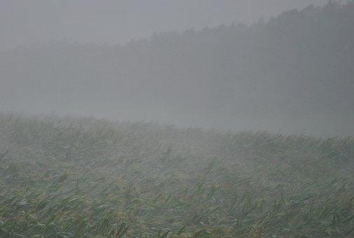 Thunderstorm, Downpour, Forward, Rain, Gloomy