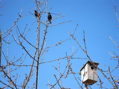 Aviary, Bird Feeder, Autumn, Winter, Nest, Tree, Nature