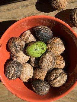 Walnuts, Walnut Shell, Green, Autumn, Juglans Regia