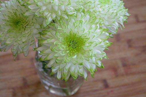 Flowers, White, Green, Spring, Garden, Plant, Sun