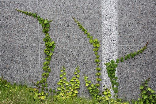 Ivy, Vine, Abstract, Nature, Plants, Green