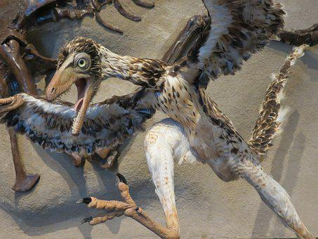 Archaeopteryx, Bird, Dinosaur, Transitional, Museum