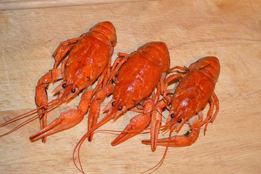 Cancer, Boiled, Boiled Lobster, Appetizer, Beer