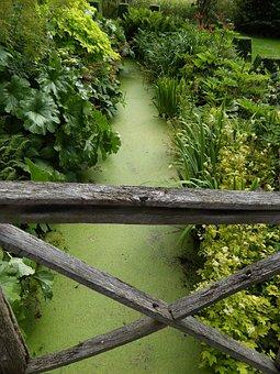 Wooden Bridge, Brook Green, Bridge Brook Duckweed
