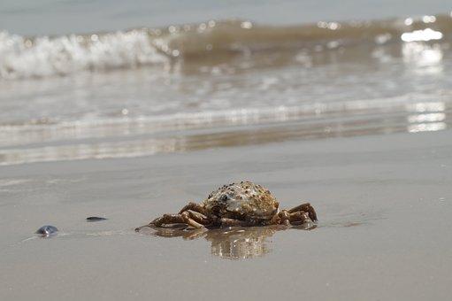 Coney Island, Cancer, New York, Beach, Sand, Sea