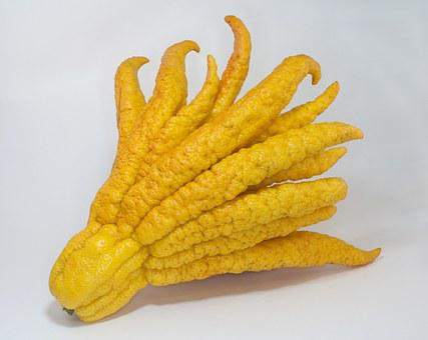 Buddha's Hand, Citron, Citrus, Exotic, Fruit, Yellow