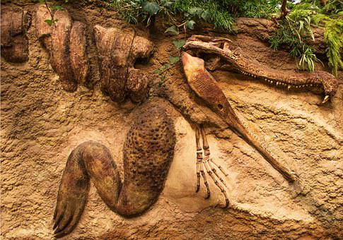 Fossil, Sandstone, Ancient, Crocodile, Dinosaur