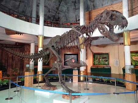 Skeleton, Dinosaur, Display, Museum, Prehistoric