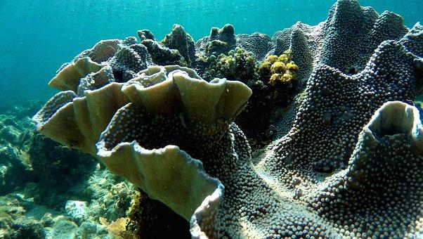 Coral, Water, Diving, Sea, Ocean, Underwater