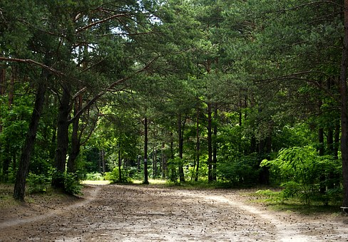 Forest, Tree, Way, Sand, Green, Nature, View, Landscape