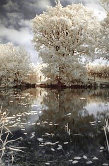 Ir, Infrared, Tree, Nature, Landscape, Water, Pond