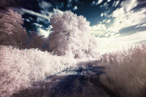 Infrared, Ir Vision, Dream, Filter, Landscape, Surreal