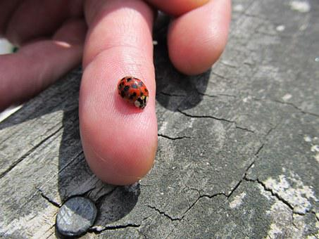 Ladybug, Wood, Nature, Insect, Summer, Spring, Green