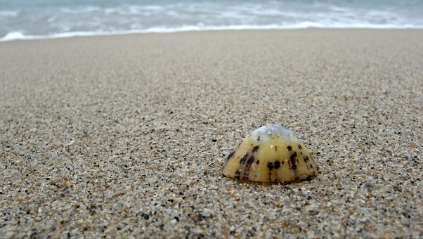 Limpet, Shell, Alone, Lonely, Single, One, Beach, Sand