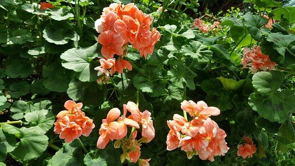 Flowers, Garden By The Bay, Orange Flowers