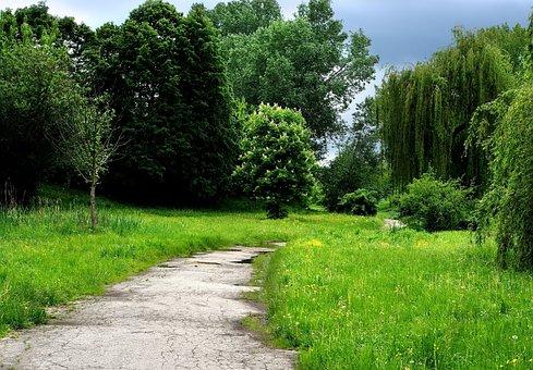 Grass, Tree, Park, Way, Sky, Blue, Green, Spring