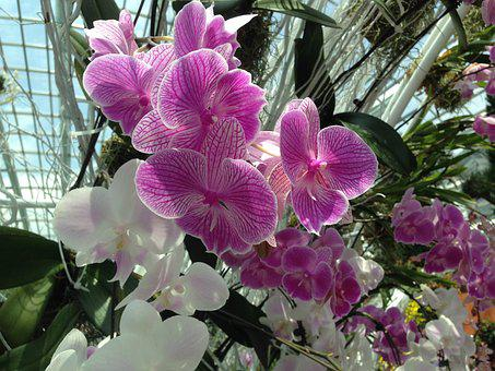 Gardens By The Bay, Orchid, Purple