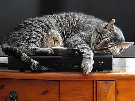 Cat, Pet, Sleeping, Kitty, Tiger, Stripes, Watchful