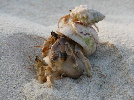 Cancer, Sand, Holiday, Sea, Tropical, Crab, Shell