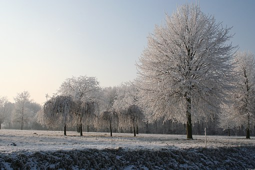 Winter Beauty, Winter Portrait, Winter Trees