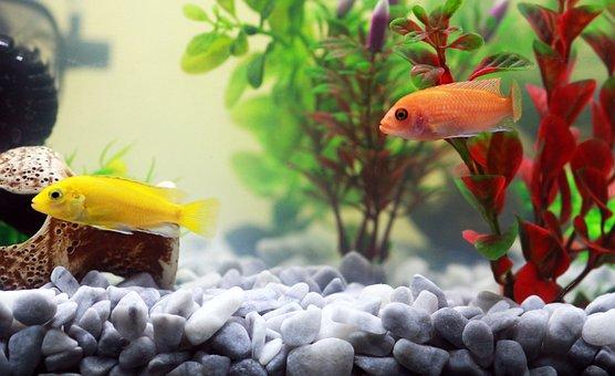 Fish, Aquarium, Yellow Fish, Water, Orange, Zoo