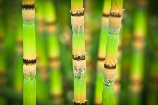 Bamboo, Bright, Bamboo Stalks, Green, Bamboo Greenhouse