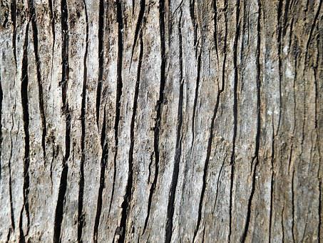 A Bark Of Palm Tree, Bark