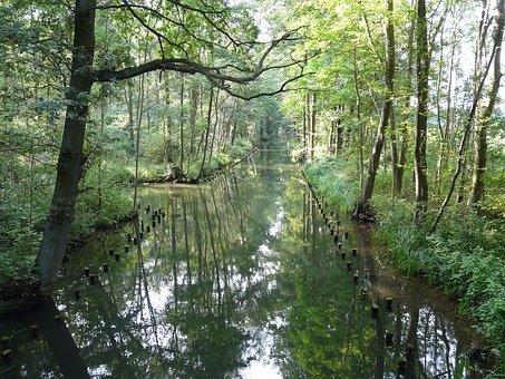 Spreewald, Biosphere Reserve, Idyll, Forest, Summer