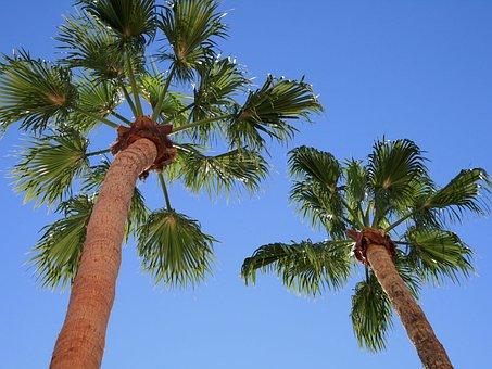 Palm Trees, Blue Background, Sky, Palms, Tropical