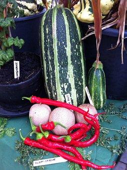 Pumpkin, Eat, Deco, Vegetables, Cook, Choose, Food