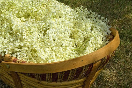 Elderflowers, English Countryside, Cordial