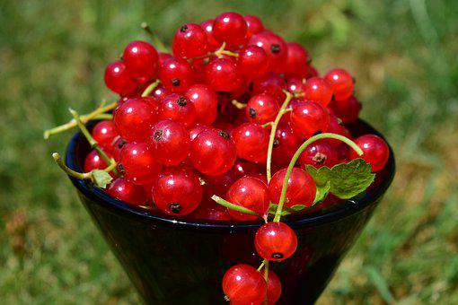 Currants, Cup, Summer, Red, Close, Decoration, Fruits